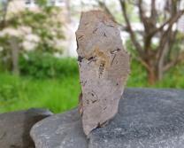 Phlebopteris woodwardii.