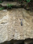 Trace fossil - Arthropleura tracks, with hammer for scale