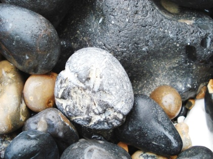 Flint Micraster urchin, found among shingle