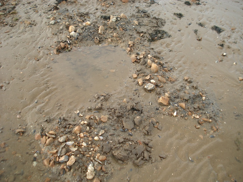 Material surrounding bait digger hole