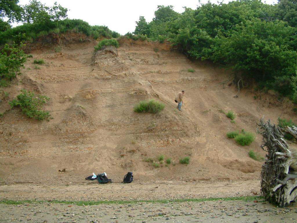 Levington – UK Fossil Collecting