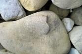 Coral in limestone
