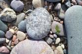 Coral pebble