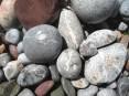 Corals in pebbles