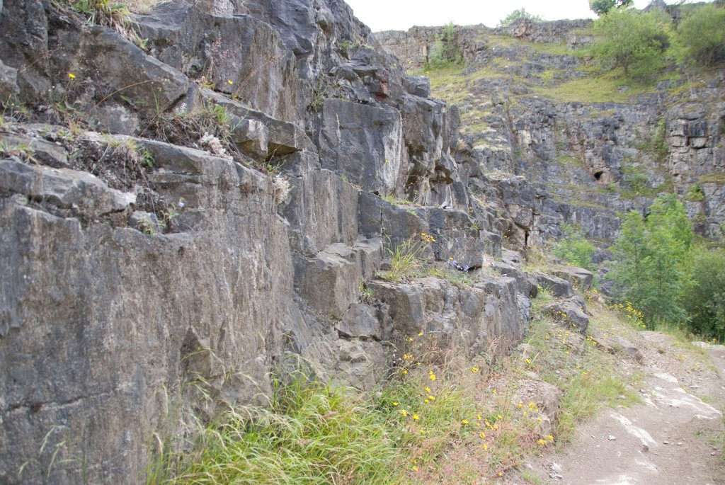 Butts Quarry Uk Fossil Collecting