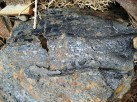 Fossil wood and coal
