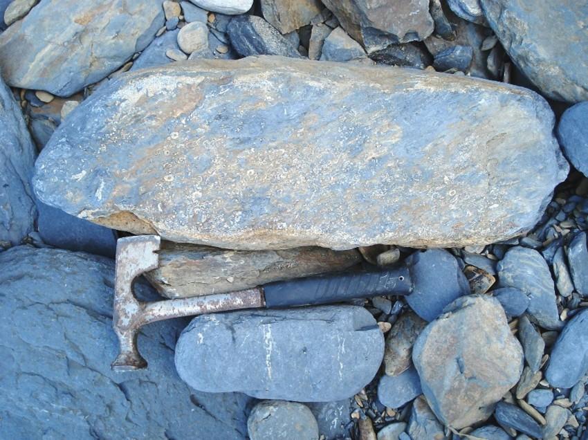 Large crinoidal limestone slab
