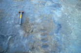Large trace fossil trackway