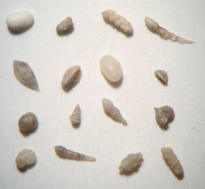 microfossils4