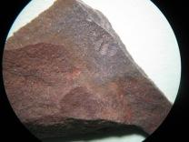 Partial trilobite