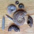Ammonites and Belemnites from Tidmoor Point, Dorset