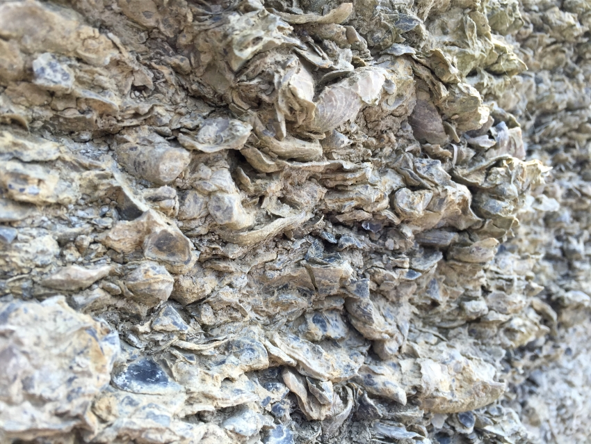 oystersbed4