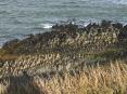 Portmarnock beach (14)